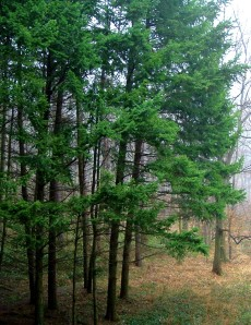Forest at Sopron Hungary