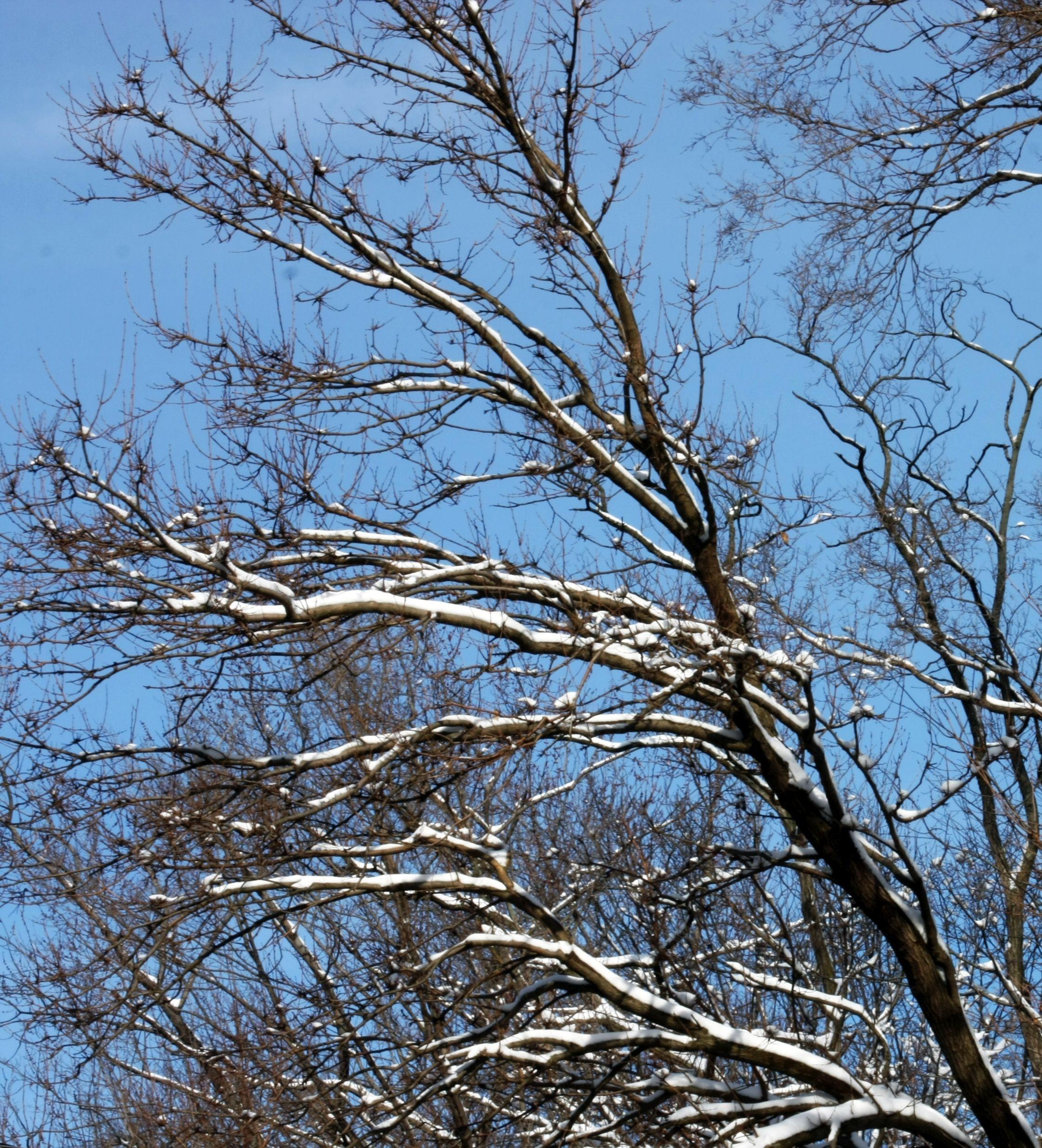 winterpark_1ee